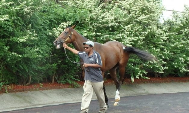 Fasig-Tipton, OBS, Keeneland to ban bisphosphonates in young horses