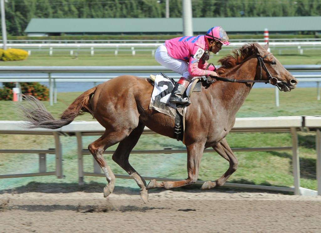 Top Billing. Photo courtesy of the Maryland Jockey Club.