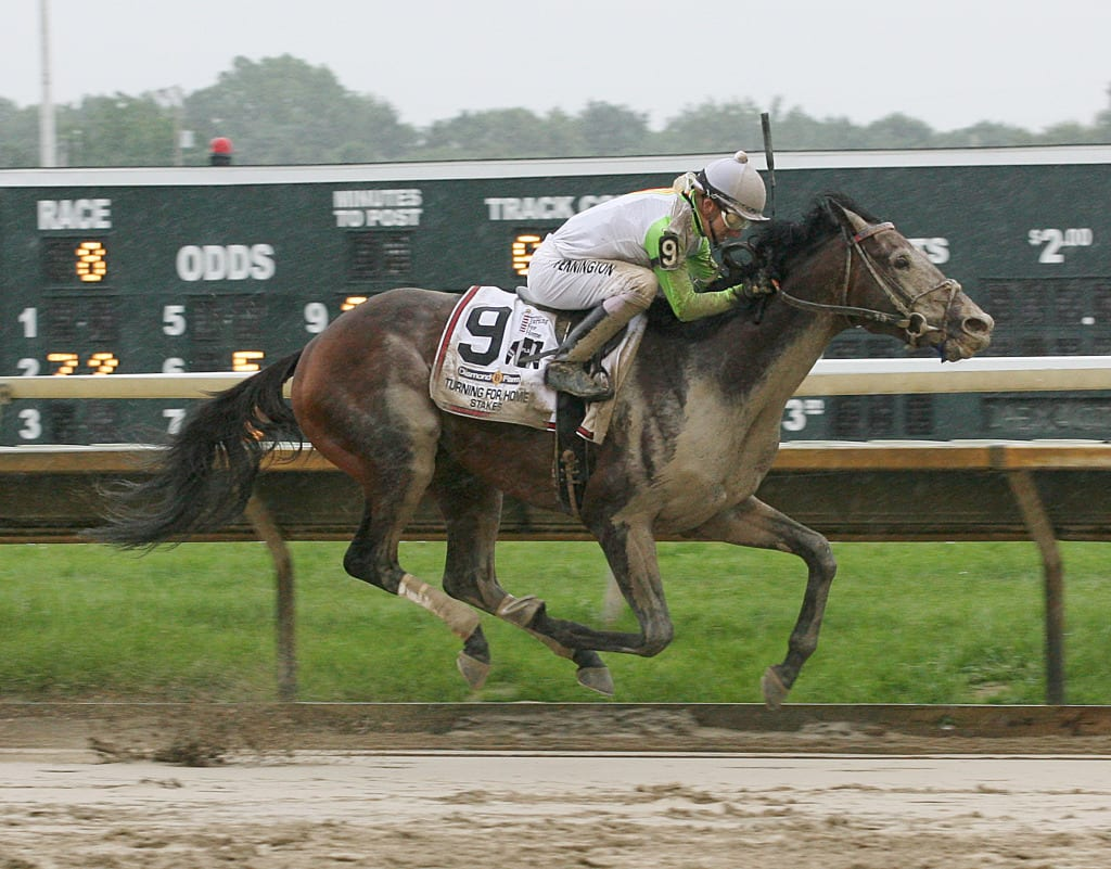 Edge of Reality emerges from the mud to win the Turning for Home Stakes Saturday at Parx.  Photo taken by Barbara Weidl / Equi-Photo