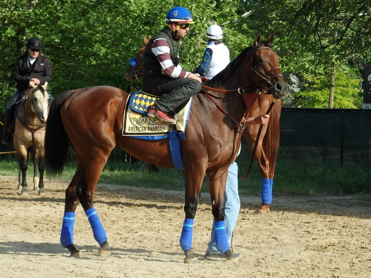 American Pharoah in photos
