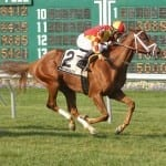 Cali Thirty Seven seeks second straight stakes win