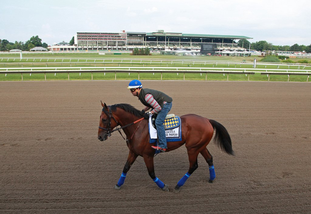 American Pharoah at Monmouth Park. Photo By Bill Denver/EQUI-PHOTO