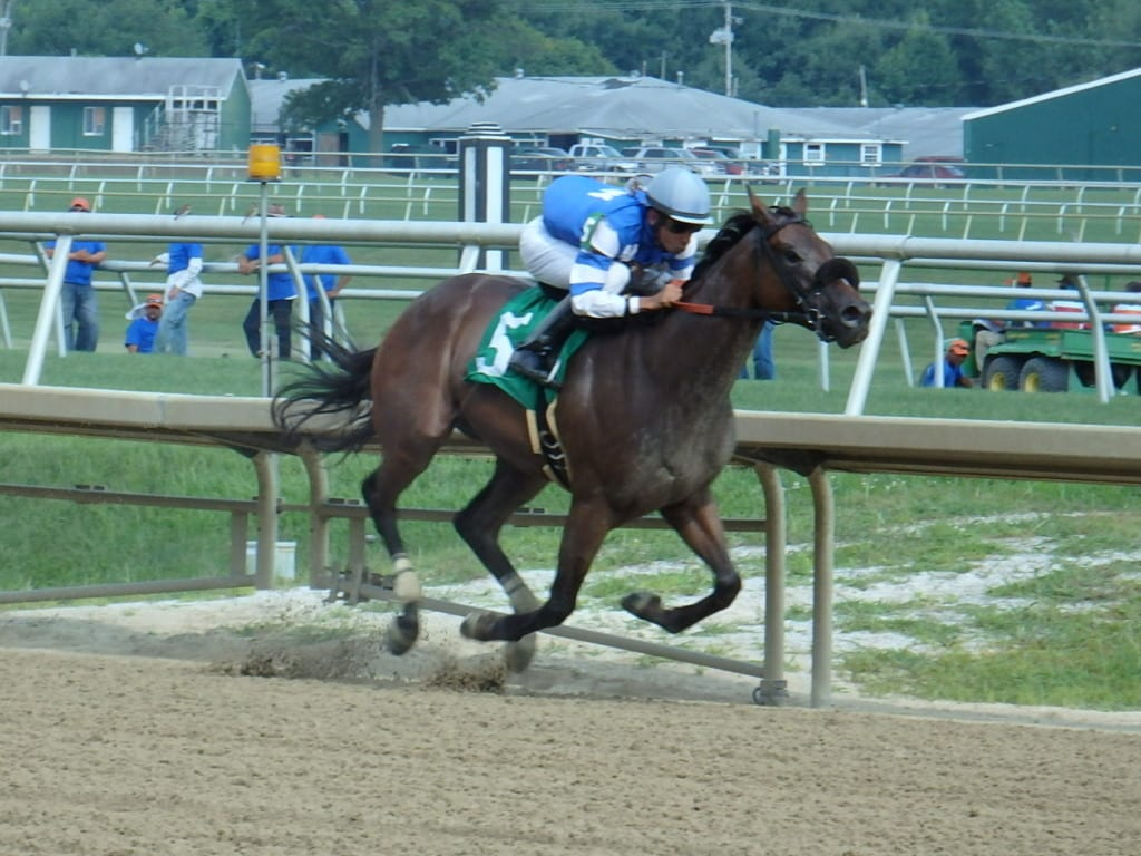 Table Jumper was all by her lonesome in winning the sixth at Laurel. Photo by The Racing Biz.