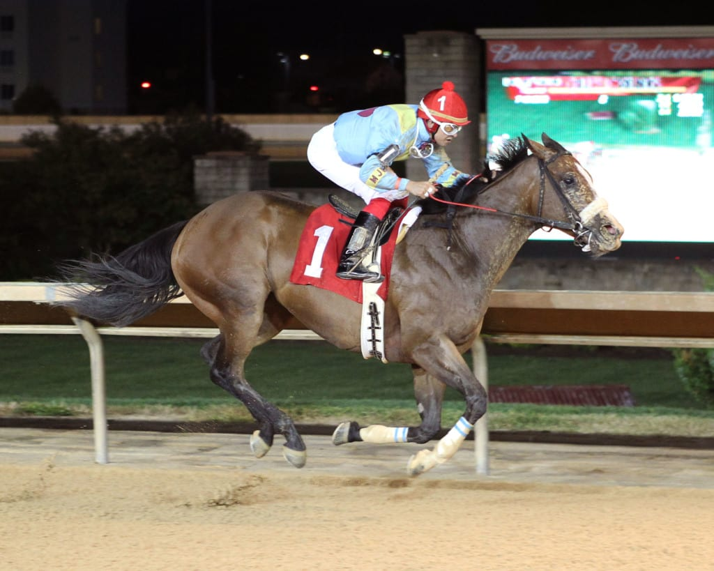 Chrome Mine is one of two fillies that give trainer David Walters a strong hand in the distaff division at Charles Town. Photo by Coady Photography.