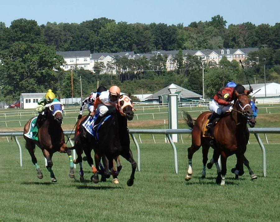 Ben's Cat (outside) wore down Night Officer. Photo by The Racing Biz.