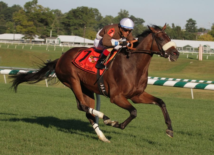 Phlash Phelps held off Eyeplayeveryday to win the Find Stakes. Photo by Laurie Asseo.