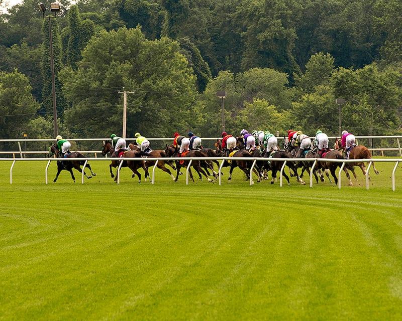 Rounding the turn. Photo by Jim McCue, Maryland Jockey Club.