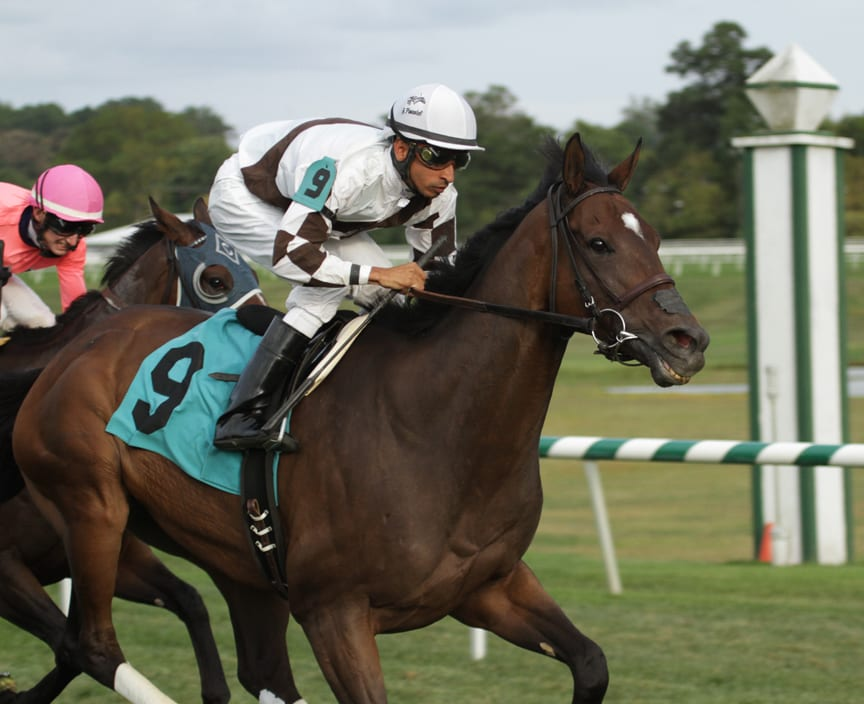 Two Notch Road, under Julian Pimentel, eased home a winner in the Punch Line Stakes. Photo by Laurie Asseo.