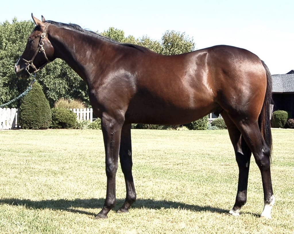 Hip 154 is a Delaware certified Jump Start colt. Photo courtesy of Bill Reightler.