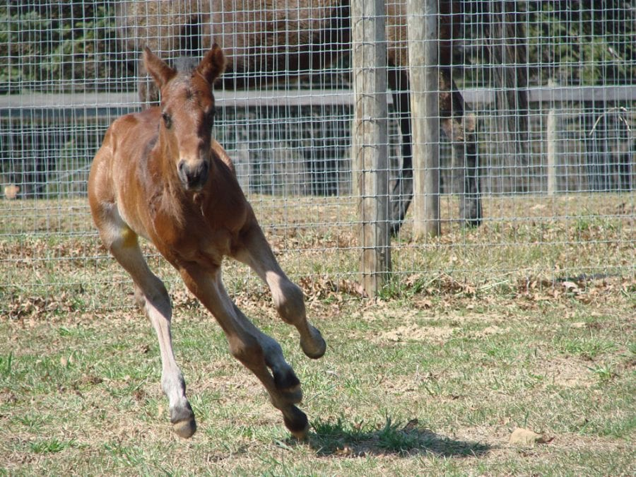 Favorite Tale: always running. Photo by Dawn Newman.