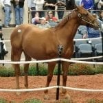 575 catalogued for Fasig-Tipton two-year-old sale