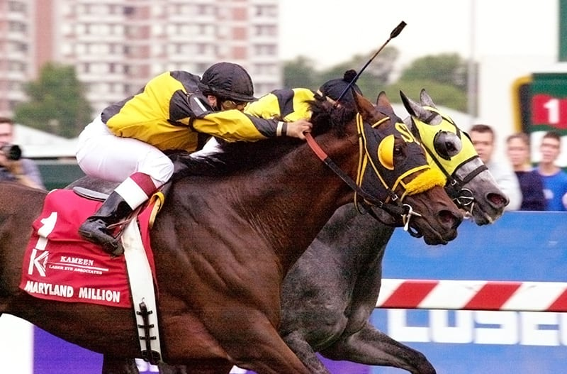 The gritty La Reine's Terms won the Maryland Million Turf in 2002 and 2005. Photo by Jim McCue, Maryland Jockey Club.