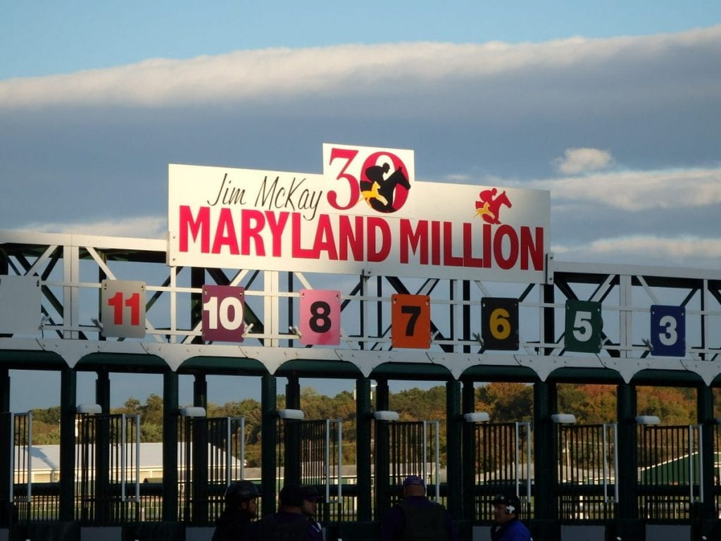Maryland Million starting gate. Photo by The Racing Biz.