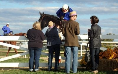 October tabbed Maryland Horse Month