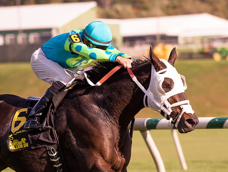 Monster Sleeping took the Maryland Million Ladies for the second time in three years. Photo by the Maryland Jockey Club.