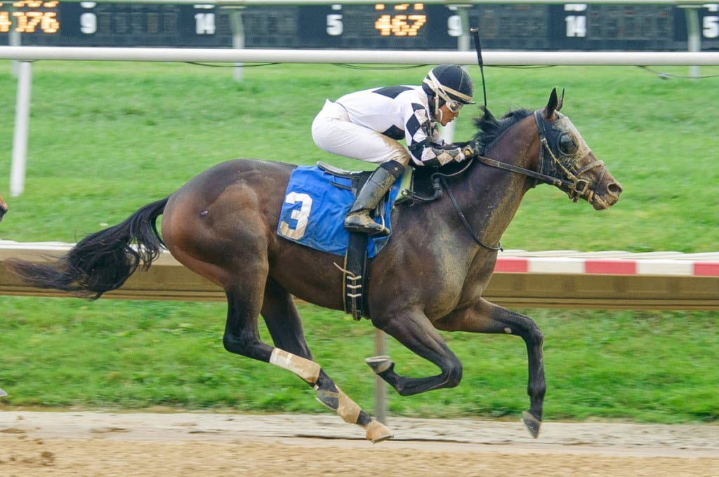 Ravenheart broke his maiden at first asking two weeks ago at Delaware Park. Photo by HoofprintsInc.com