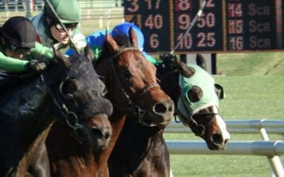 Laurel Park to race Mondays in the fall