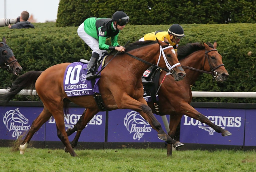 The Pizza Man runs in this year's Breeders' Cup Turf. Photo by Thomas Allen Pauly.