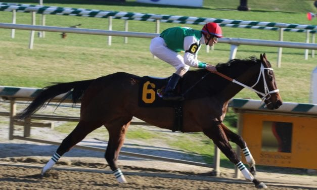 Cathryn Sophia tabbed as Md-bred Horse of the Year