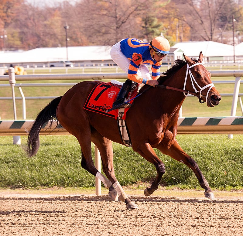 Lost Raven looks to make a triumphant return to Laurel Park for trainer Todd Pletcher. Photo by Jim McCue, Maryland Jockey Club.