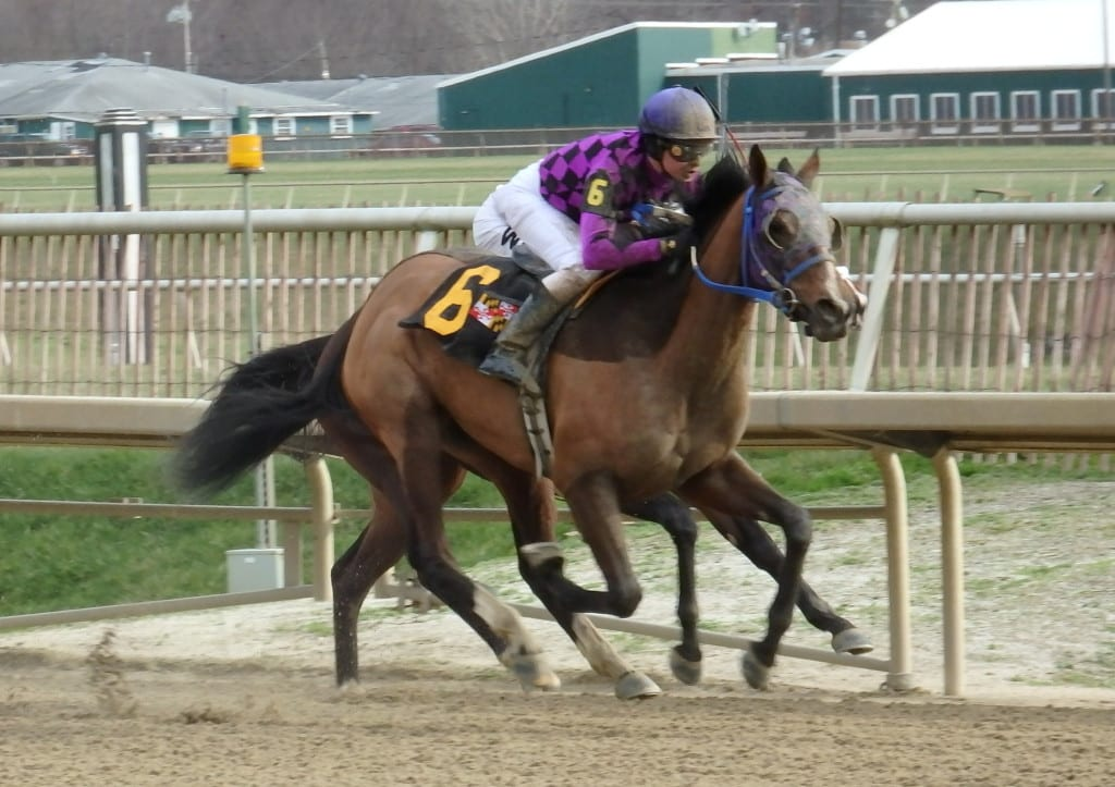 Eric Camacho guided Andiemac to a win on January 1 at Laurel Park. Photo by The Racing Biz.