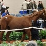 Fasig-Tipton looking to bolster racing age group