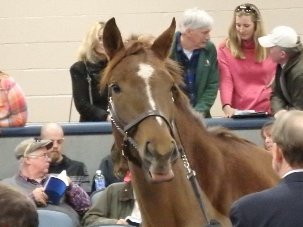 Hip 147 at Sunday's Fasig-Tipton Mixed Sale. Photo by The Racing Biz.
