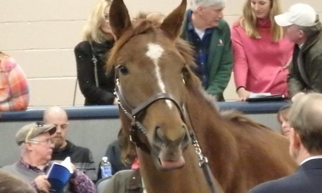 Some hips to watch at Fasig-Tipton sale