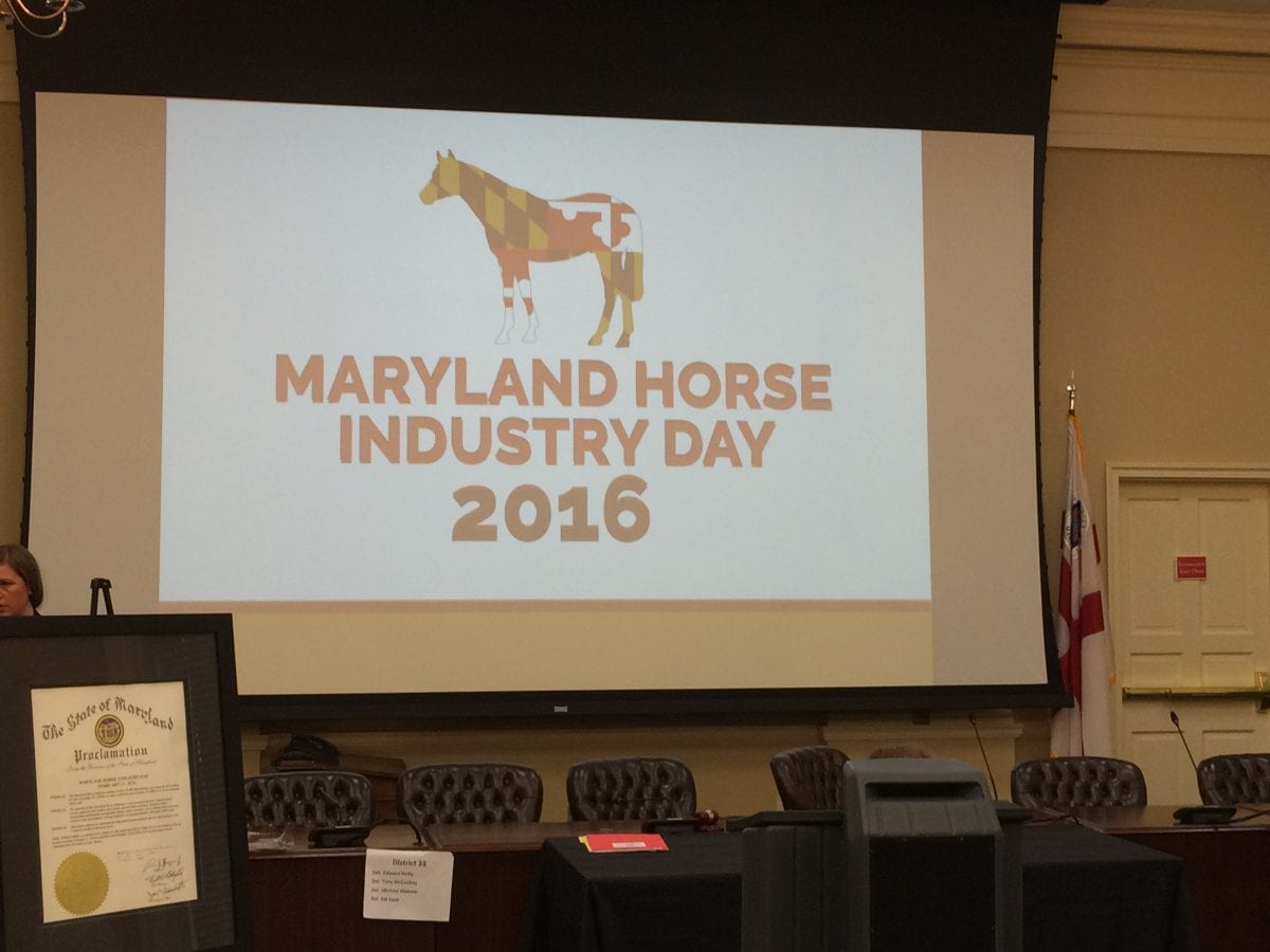 Horse Industry Day showcases industry cohesion