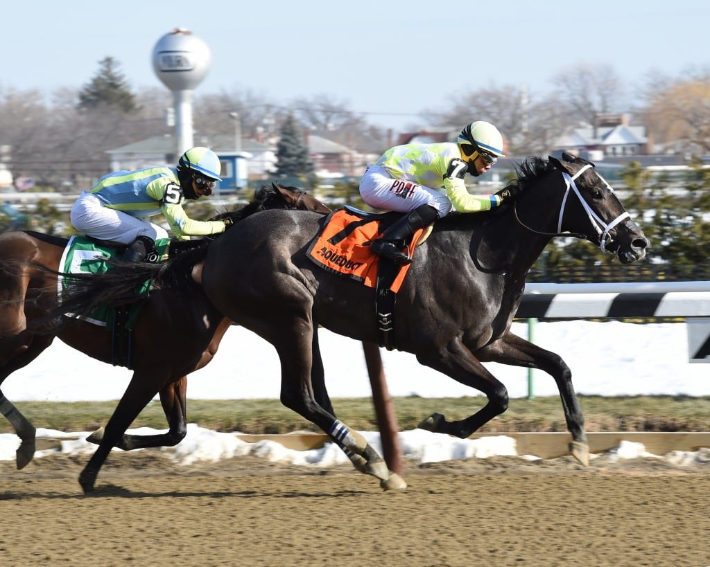 Sunny Ridge took Saturday's Grade 3 Withers. Photo by Chelsea Durand, NYRA.