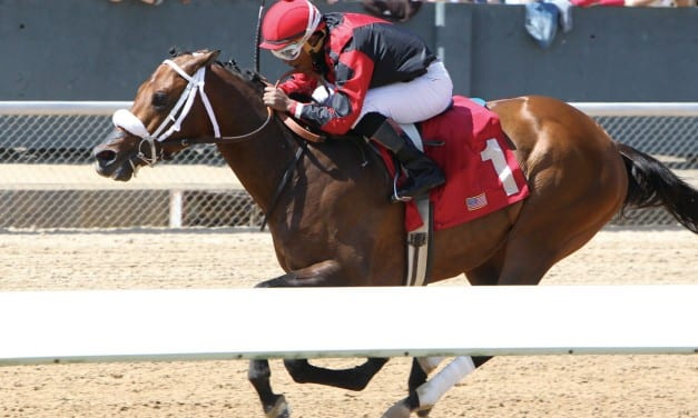 Tisdale a beautiful horse with a bright future