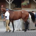 Fasig-Tipton sale rallies in second day