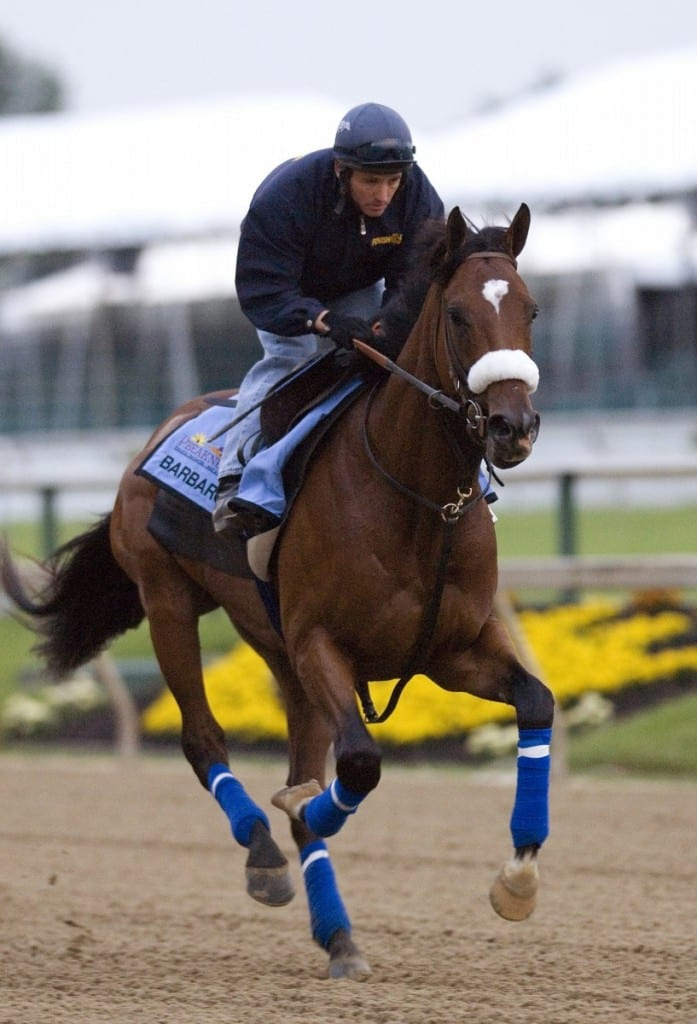 10 Years Since Barbaro Laminitis Still A Challenging Foe The