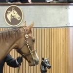 First day of Fasig-Tipton sale sees declines