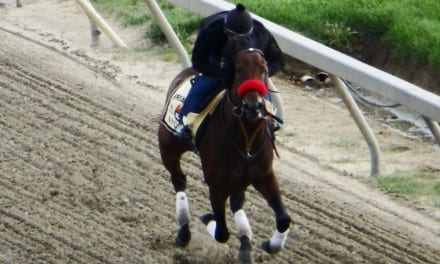 Nyquist to skip Belmont Stakes