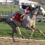 Aldrin, kin to Tapit, to stand at O'Sullivan