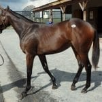 Over 230 cataloged for Fasig-Tipton mixed sale