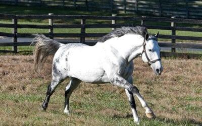 Bonita Farm adds Norumbega to stallion roster