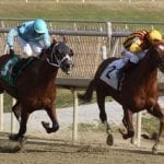 NJ-bred Irish War Cry working towards likely Gulfstream start