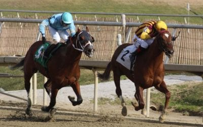 Irish War Cry among Top Midlantic-breds in action