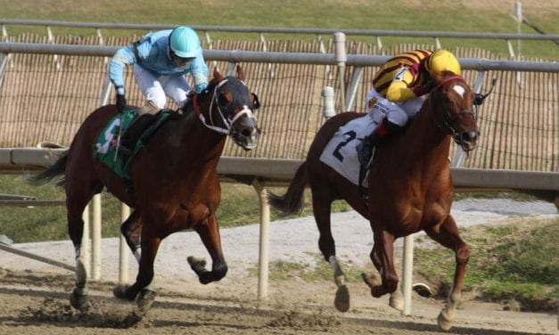Irish War Cry leads Top Midlantic-bred Poll on Belmont eve