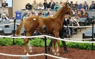 Fasig-Tipton: Supplemental catalog for mixed sale online