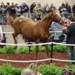 Fasig-Tipton 2019 Mixed Sale: By the numbers