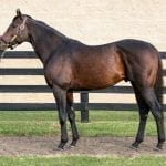 """""""Wow factor"""" horse Peace and Justice standing in Pennsylvania"""