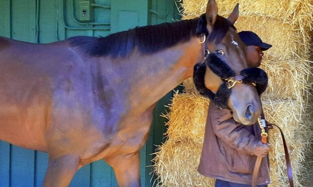 Royal Mo injured, out of Preakness