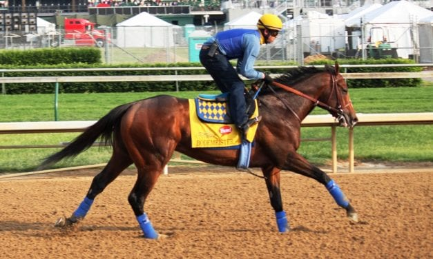 """Bodemeister, the """"almost"""" horse"""
