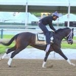 """Always Dreaming """"ready to roll"""" as Preakness preparation ends"""