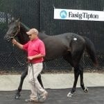 Fasig-Tipton numbers up after busy first day