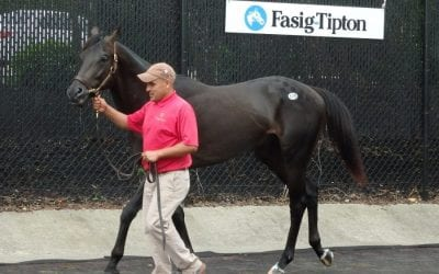 Sales: Midlantic-breds and the middle of the market