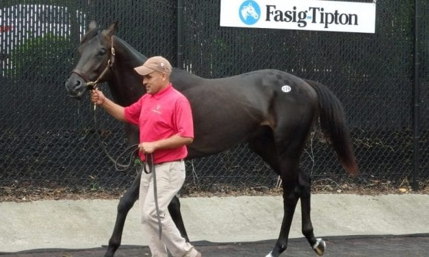 Caution in the air for Fasig-Tipton yearling sale